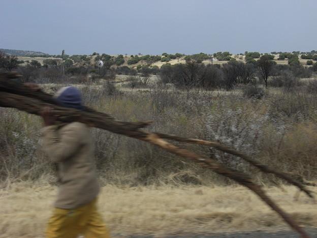 フリーステート 薪を運ぶ男性