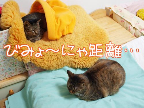 100131-2【猫写真】びみょ~にゃ距離