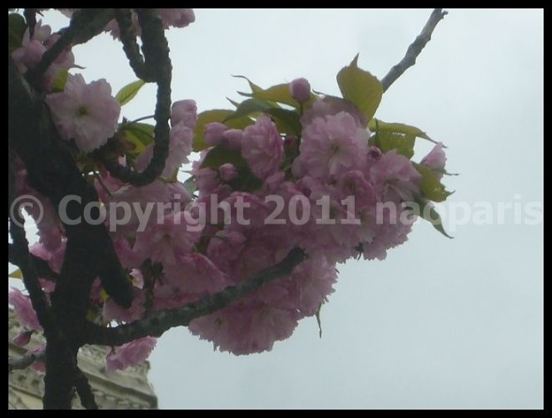 写真: P2680855