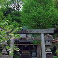 Photos: 鎌倉御霊神社梶原