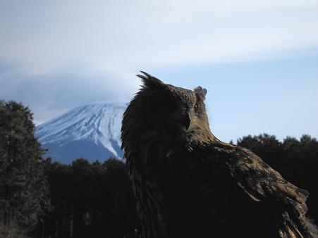 富士にワシミミズク