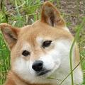 Photos: 犬の鼻も・・