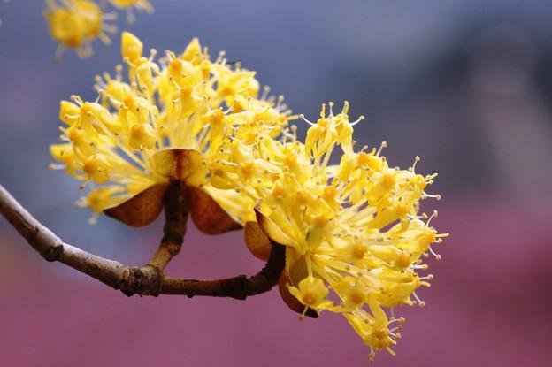 黄色と桃色