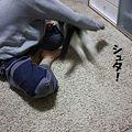 Photos: あそび