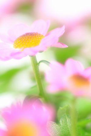 ほんのり春色に(*^_^*)