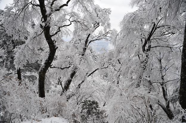 枝垂桜のような木々