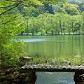 小さな湖の小さな橋