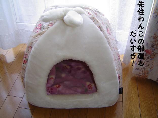 Photos: チョコちゃんのお部屋 009