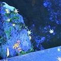 写真: ☆銀河の星☆ or 深海の情景  ヒトデ  ☆がいっぱい (*^-^)ニコ