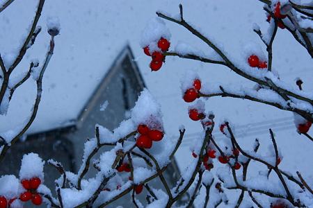 舞い降りる雪と真っ赤な実(1)
