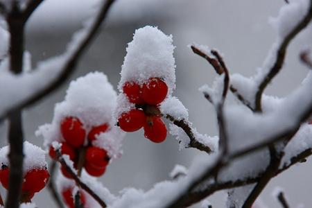 雪帽子  冷たいよ~・゚゚・(×_×)・゚゚・