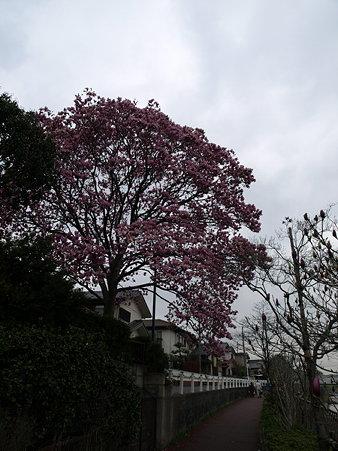 お花(恩田川沿い)
