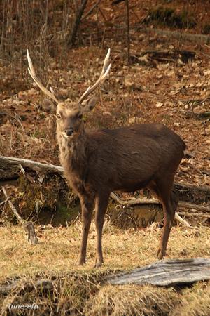 鹿に会った