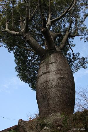 メタボの木