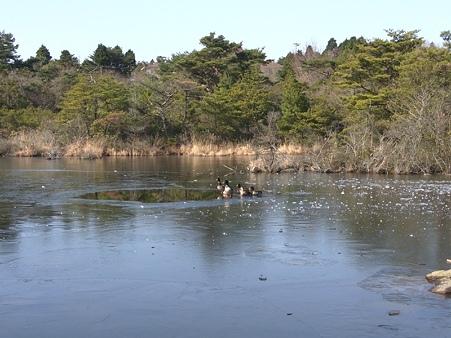 2010年正月帰省 野呂山 氷池とマガモ達01
