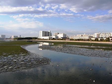 20100123 谷津干潟 水鏡ロード02