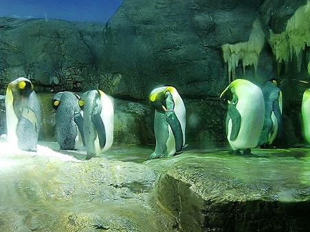夜のペンギン2296