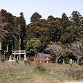 写真: 桜実神社遠景