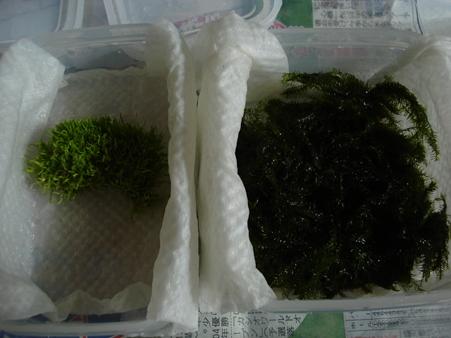 20091118 有沢諒さんからのキリプレ