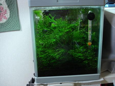 20091203 41cm水槽のモス