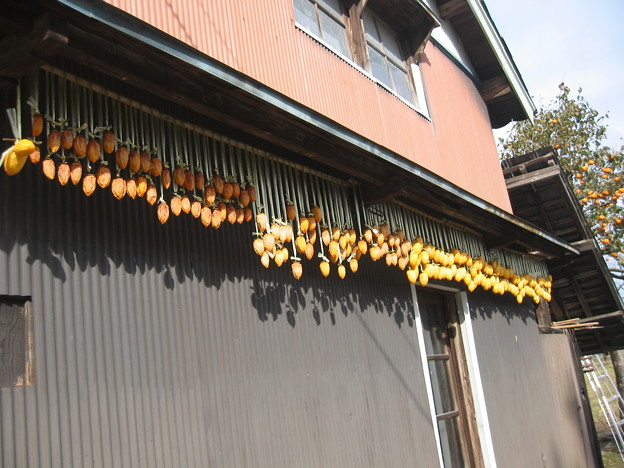 Photos: 2009/11/08 02 干し柿
