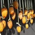 Photos: 2009/11/08 05 干し柿(5日間)