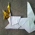 写真: 小松パピヨン、折り畳めたYO!
