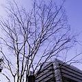 Photos: 2009-12-25の空