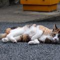 Photos: 三毛猫??