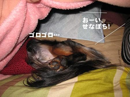 senna0446