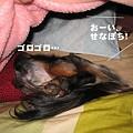 写真: senna0446