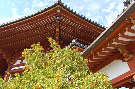 興福寺 南円堂右近の橘