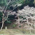 Photos: 菩提山正暦寺DSC_0842
