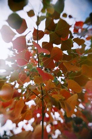 トイカメラde紅葉2009/11/12-11650017