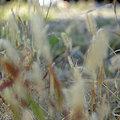 Photos: 20091120_090831