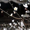 Photos: 20100219_103038