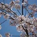 Photos: 20110410_142100