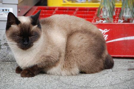 ラテそっくりのネコさんにゃ。