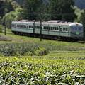 Photos: 茶畑を行く