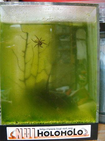 クモが水中に移動!!