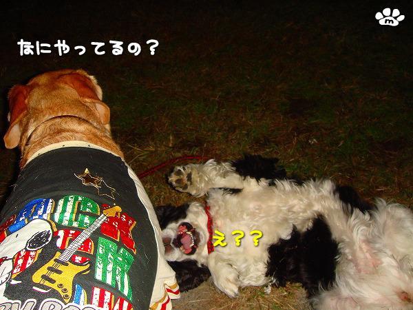 s-myu2009_1113(015)