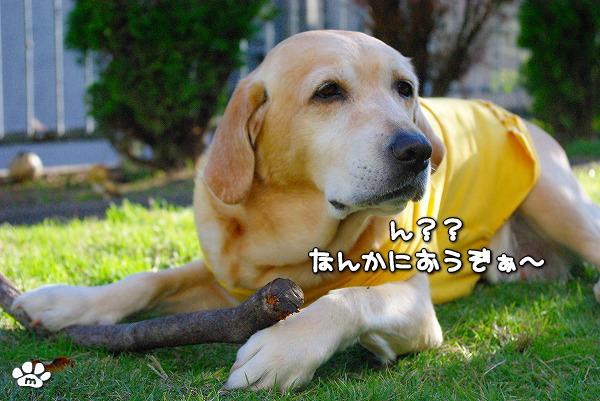 s-myu2009_1114(007)