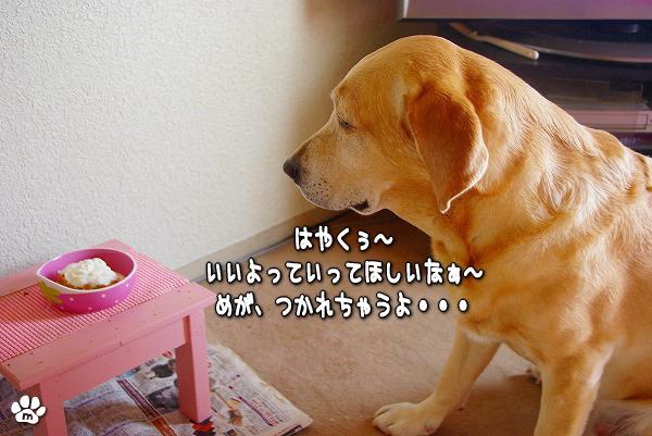 s-myu2009_1127(006)