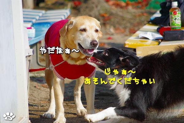 s-myu2009_1128(033)