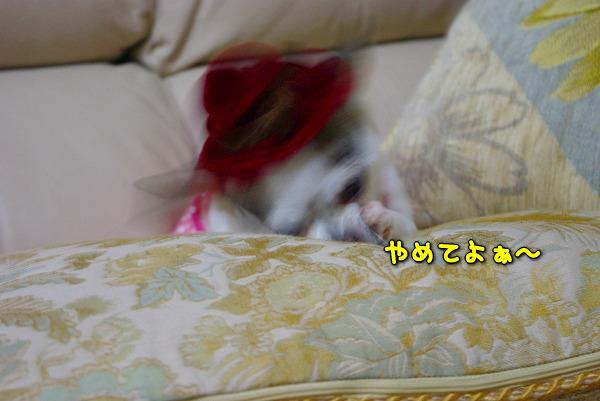 s-myu2009_1231_6