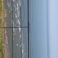 写真: 朝の海。