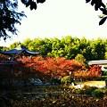 写真: 勧修寺の紅葉~♪