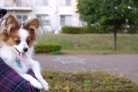 抱っこ犬の景色
