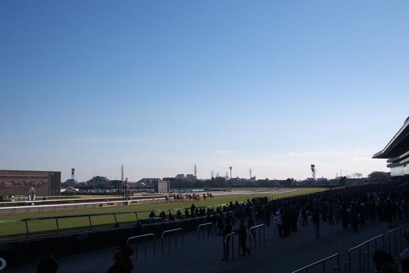 若潮賞 冬の競馬場