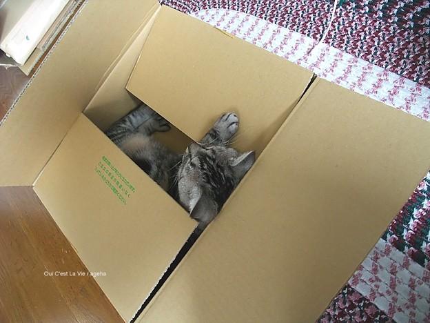 どっか行っちゃったな~と思ったら箱で寝てたり。